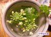 Wasabi_flower